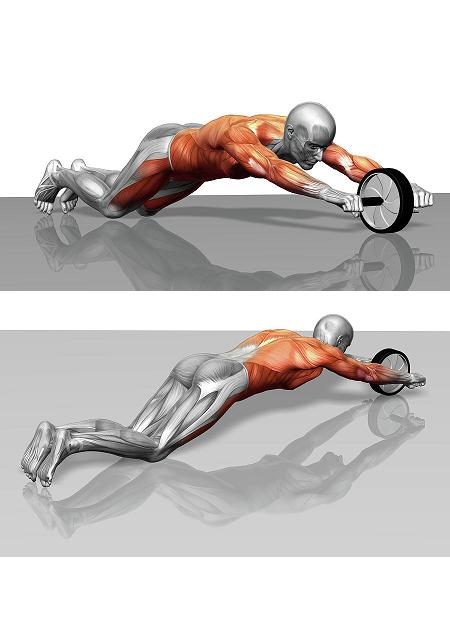 ab wheel workout - Exercise Wheel (woman) Body Sculpture - ASSEW2A