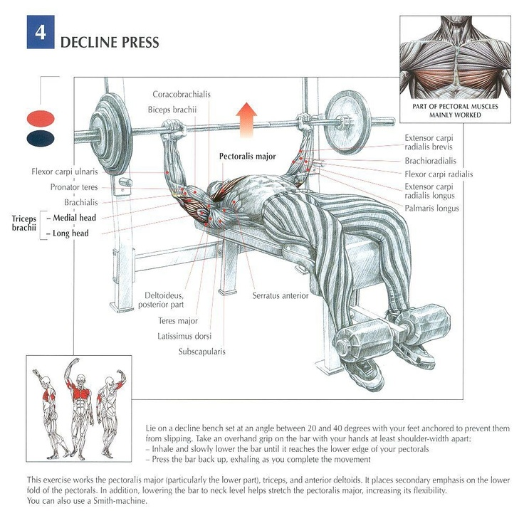 decline bench workout 2 1 - Decline Bench Body Gym Plus