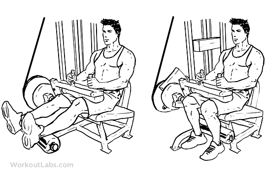 Seated Leg curl M WorkoutLabs - Body Strong Seated Leg Curl BMW-013