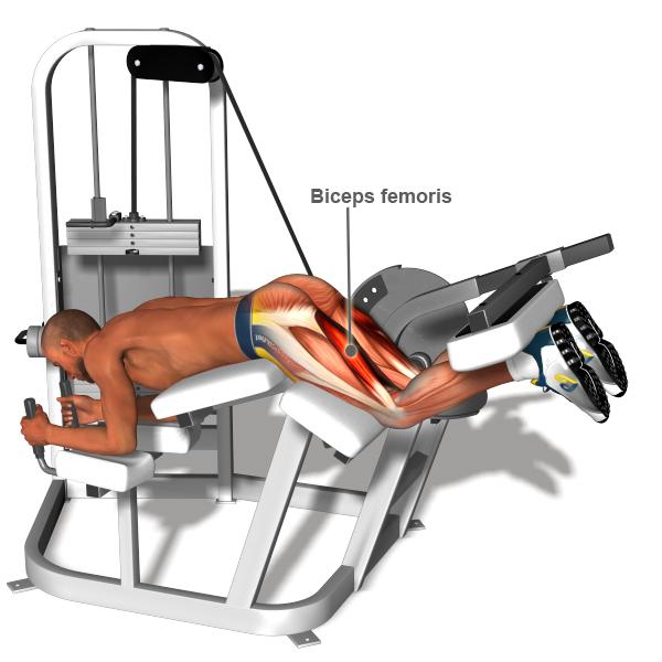 workout Glute Body Gym Pro - Body Strong Horizontal Leg Curl BMW-013A