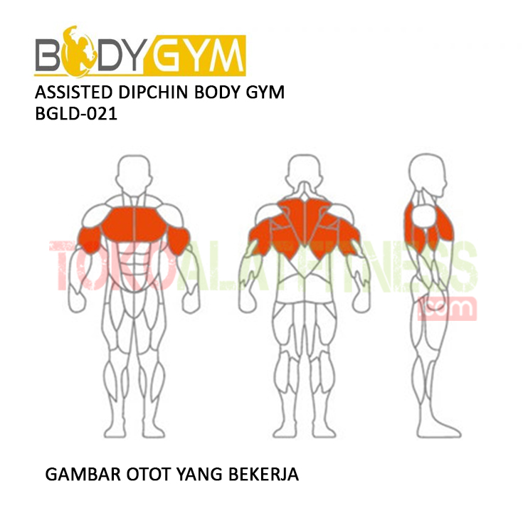 TOKO ALAT FITNESS ASSISTED DIPCHIN BODY GYM BGLD 021 3 - Assisted Dipchin Body Gym BGLD-021
